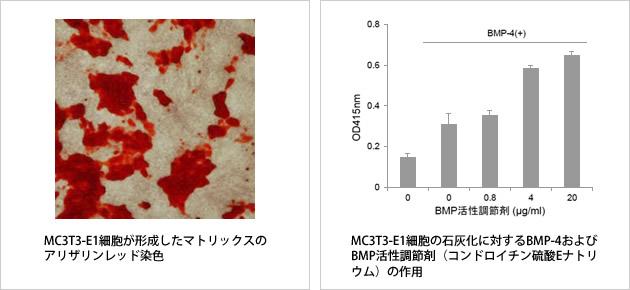 MC3T3-E1細胞が形成したマトリックスのアリザリンレッド染色|MC3T3-E1細胞の石灰化に対するBMP-4およびBMP活性調整剤(コンドロイチン硫酸ナトリウム)の作用