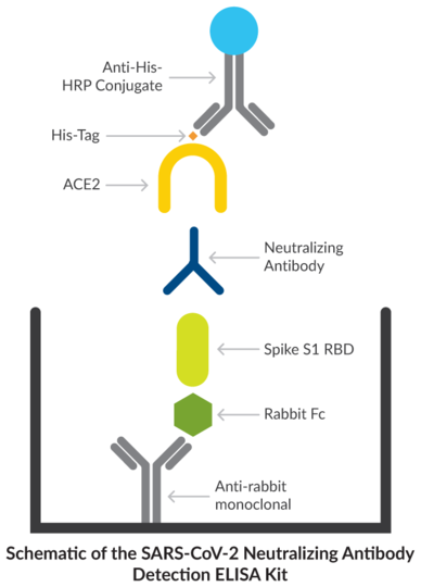 Schematic of the SARS-CoV-2 Neutralizing Antibody Detection ELISA Kit
