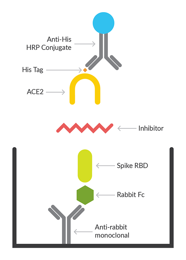 Schematic of the SARS-CoV-2 Spike-ACE2 Inhibitor Screening Assay Kit